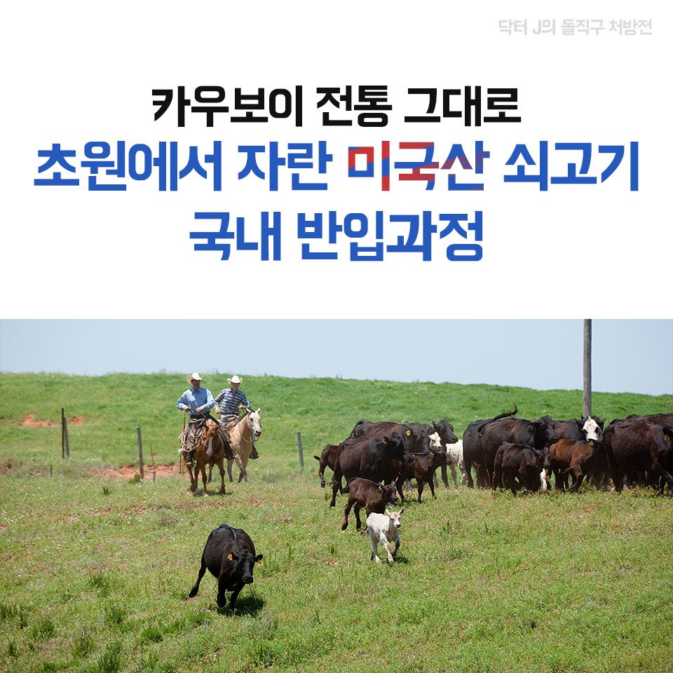 카우보이 전통 그대로 초원에서 자란 미국산 쇠고기 국내 반입과정