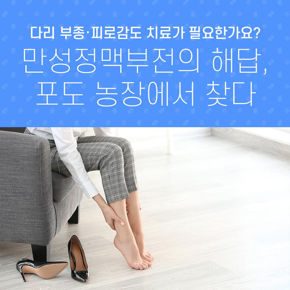 다리 부종·피로감도 치료가 필요한가요? 만성정맥부전의 해답, 포도 농장에서 찾다